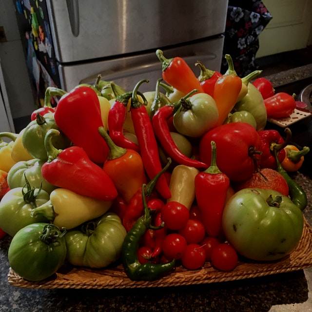 One final haul from the garden. I think I'm going to have to fry up all these green tomatoes. Nex...