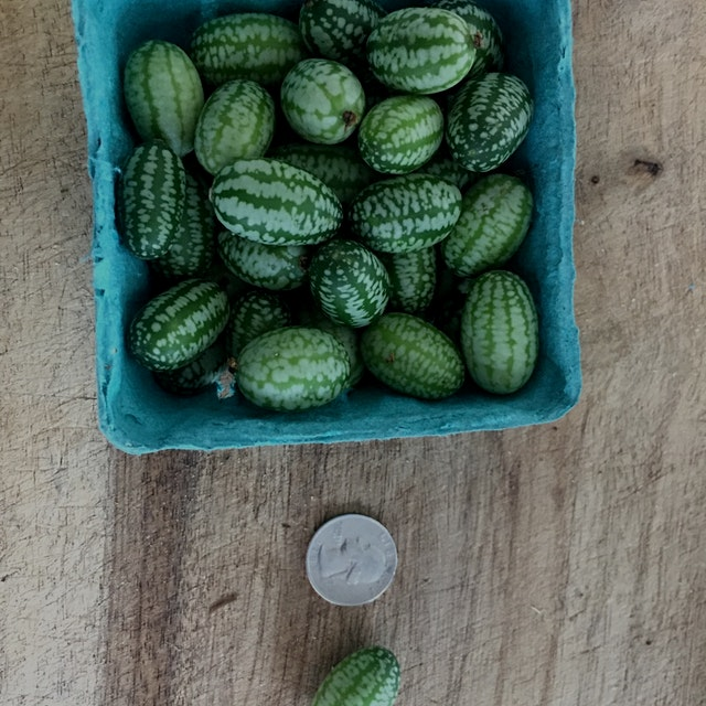 Grabbed a few of these little guys at the market this morning- juicy and lemony and snack-able!