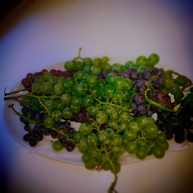 Freshly picked at the farm! #grapeseason