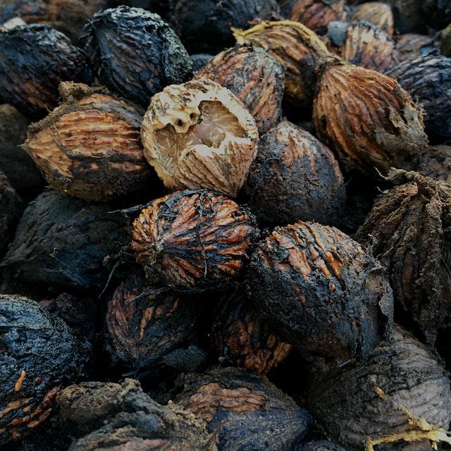 Black walnuts from our yard. #nofoodwaste #bountifulbackyards
