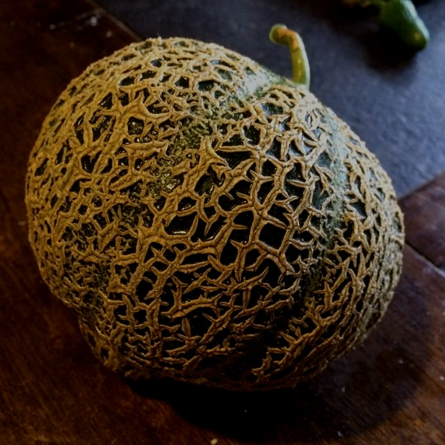 Jenny Lind Muskmelon, original seed dates back to at least 1848 #heirloom