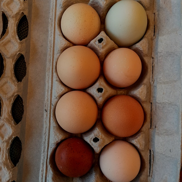 """""""Local yolk-ls"""" --Eggs we gathered yesterday from our egg co-op"""