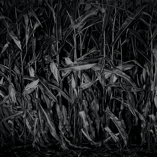 Corn, corruption, and the presidential caucuses. #policynews
