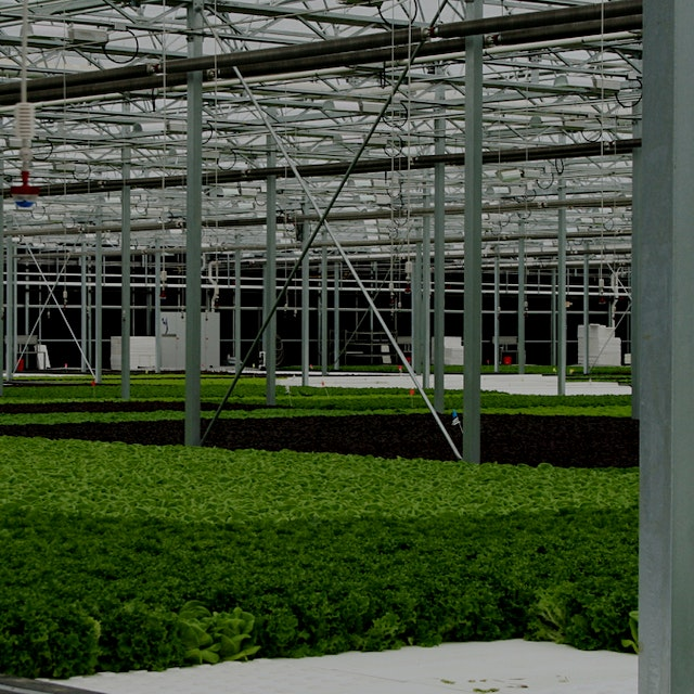 The story of a hot indoor-ag startup offers a window onto the potential and the pitfalls of the n...