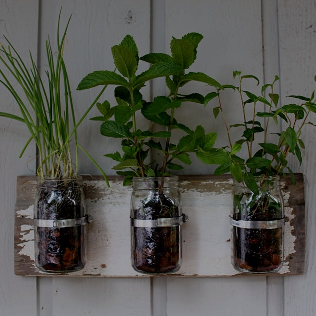 """My dad gave me a hard time that I didn't have any edibles on my vertical garden in my bedroom (s..."