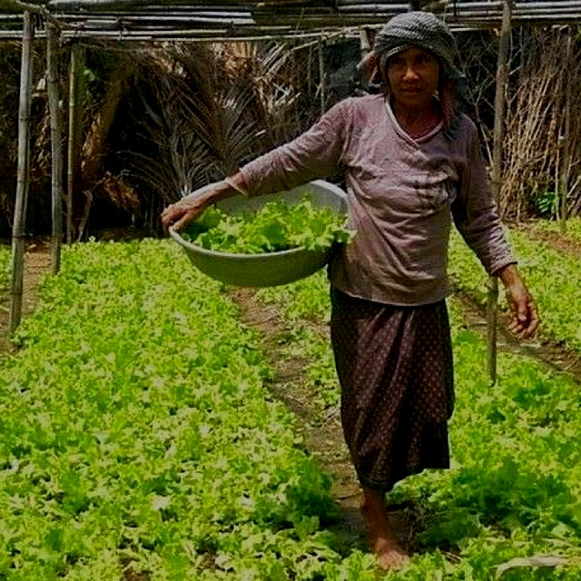 """Small-scale farming systems such as these—prevalent in many developing countries—have been calle..."