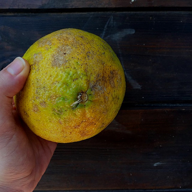 """""""""""Trying out another new food this week: Ugli Fruit, tastes like a mix of orange and grapefruit. ..."""