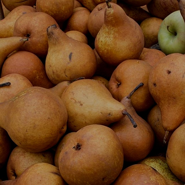"""""""""""Gorgeous pears at the farmers market this past weekend. What local food did you pick up?? #loca..."""