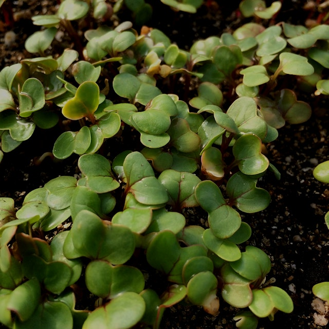 Micro greens not only have a diverse range of flavors, but they're also packed with nutrients. Ge...