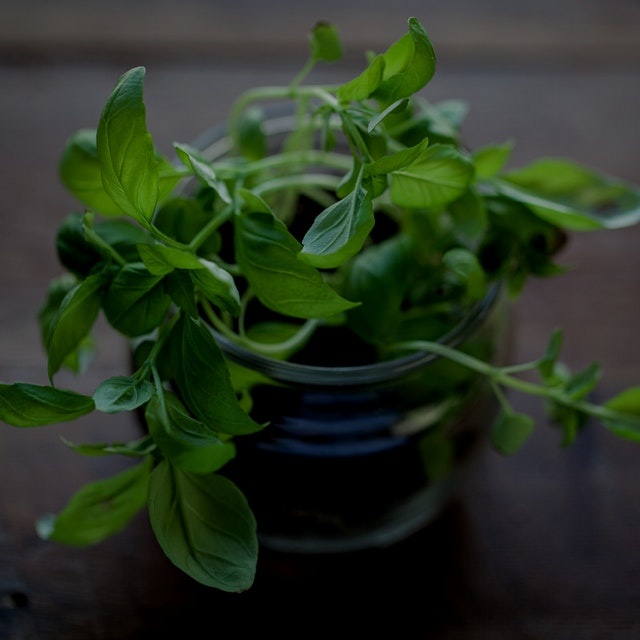 Took this @whitemoustache yogurt cup and turned it into a Basil microgreen container. #gardeningt...