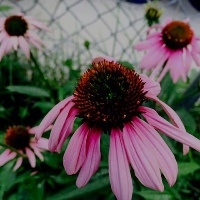 """For all of you community garden lovers! """"Join over a thousand community gardeners and greening pr..."""