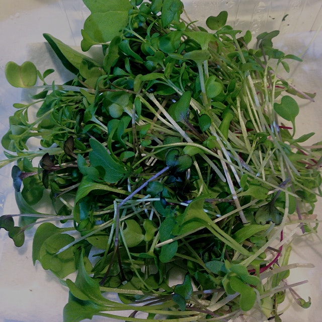 Last night I did my first real harvest of microgreens from my 👗closet-turned-vegetable garden 🌱 a...