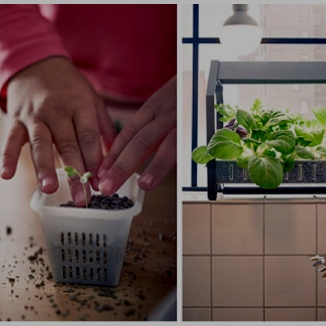 Go IKEA! IKEA has made it easier to grow your own greens in your home with the introduction of it...