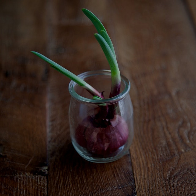 If they sprout greens, you can use them just as you would a scallion. Also, another #DIY #gardeni...