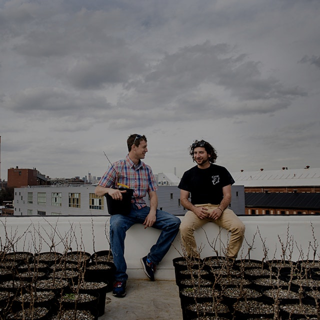"First veggie gardens, now vineyards on Brooklyn rooftops! ""If Rooftop Reds were allowed to put ""B..."