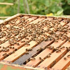 """""""This immersive introduction to beekeeping, with Bee Kind Farms bee keeper Tim Cerniglia, will leave you buzzing with excitement!"""""""