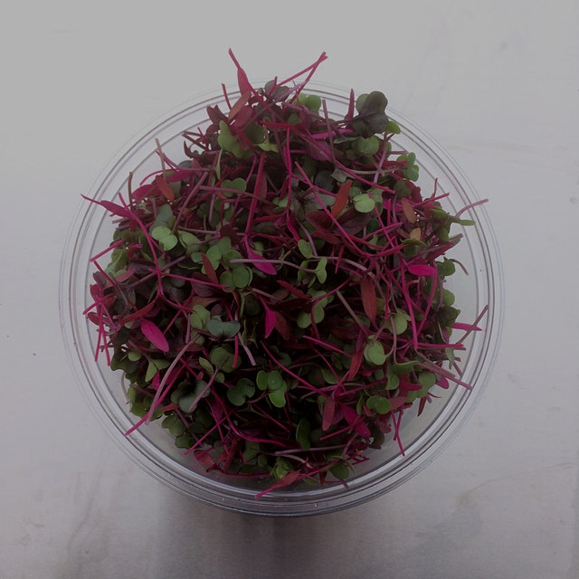 This is our mild mix. It includes red Russian kale, amaranth and red cabbage. It's packed with nu...