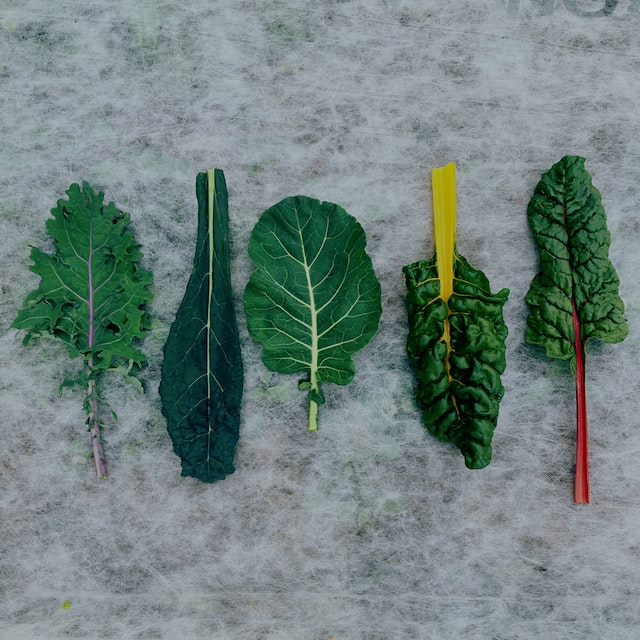 A sampling of some of what's coming out of the fields today. Red Russian Kale, Tuscan Kale, Colla...