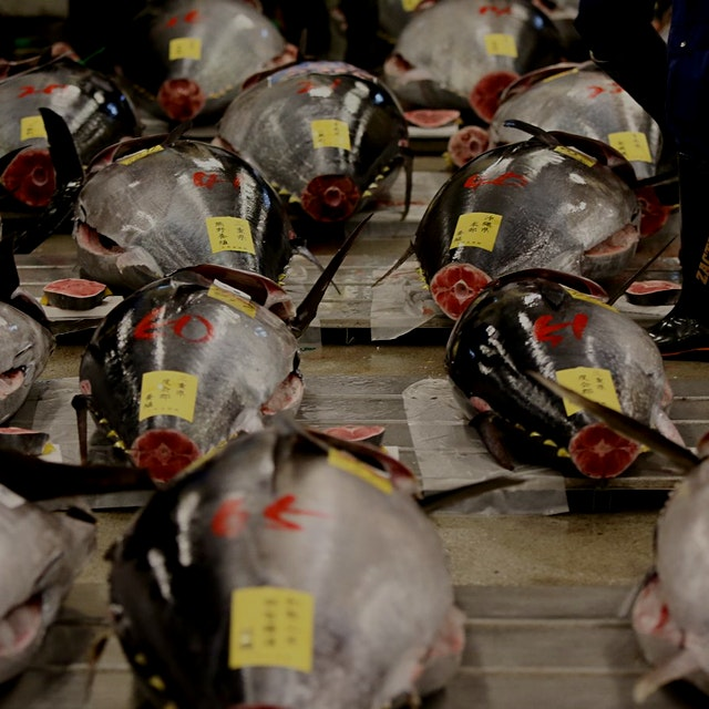 """The Pacific bluefin population has suffered staggering losses"" #foodnews #policynews"