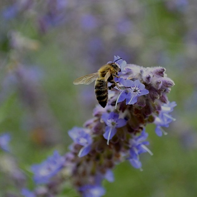 """Celebrate our winged aviators at this family-friendly workshop! Take a tour of QBG's Bee Garden,..."