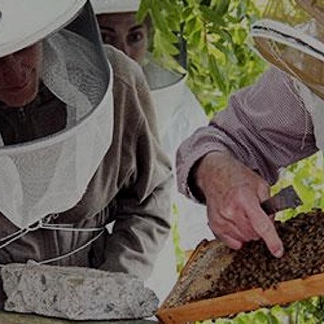 """""""URBAN BEEKEEPING: PART II Managing a Healthy Beehive  Saturday, June 25, 2016 10am - 12noon Gar..."""
