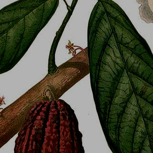 Learn all about the science of chocolate from the biogeography and evolution of the cacao plant ...