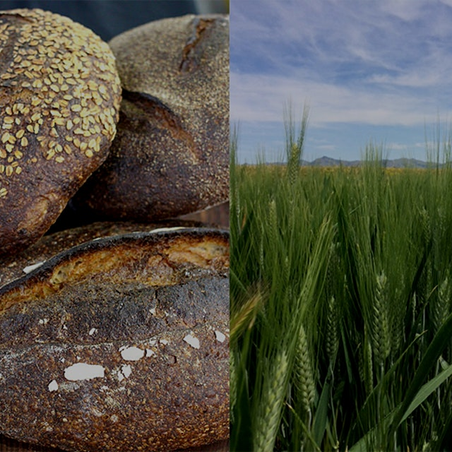 """""""Community Grains' effort to bring together farmers, plant breeders, millers, and bakers is picki..."""