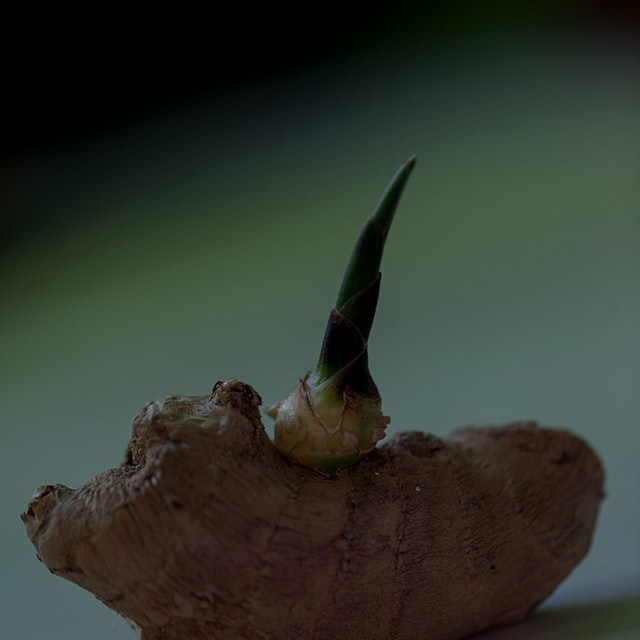 "Ginger will begin shooting out a green ""eye"" much like a potato. Soak the ginger root with the ey..."