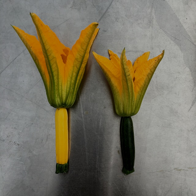 Mini golden and green zucchini with blossoms still attached. A rare and delicious treat for us! I...