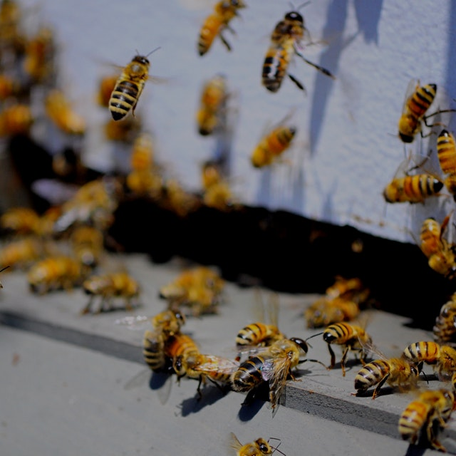 Tickets: http://www.brooklyngrangefarm.com/upcoming/assessing-your-bee-colony-early-or-mid-season...