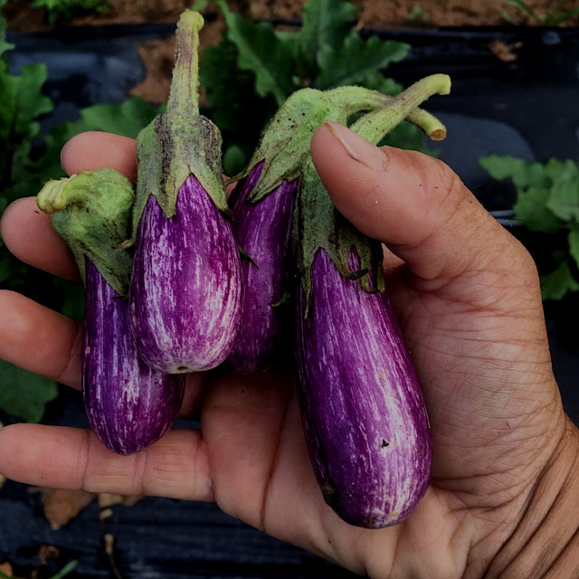 Our favorite eggplant variety. We love to simply cut these in half and pop them on the grill. How...