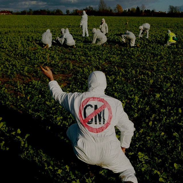 """The debate surrounding genetically modified organisms has swirled for years, but things are heat..."