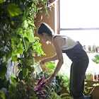"""Thanks to Modern Farmer and Aliza for the piece.   """"I think that the only way I've really been able to survive in New York is by surrounding myself with plants,"""" says Summer Rayne Oakes, who lives in what might be New York City's greenest apartment."""""""