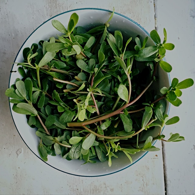 Purslane, you pretty little weed. You're trying to take over my entire vegetable garden. I'm goin...