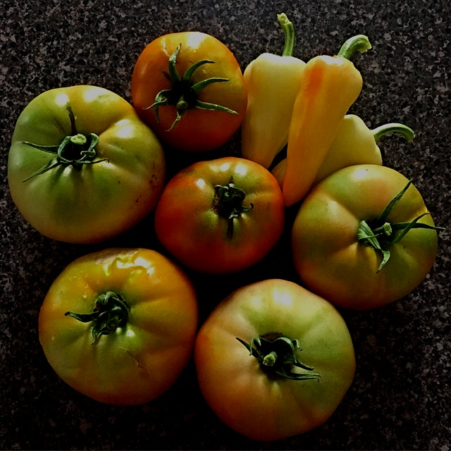 Tomatoes and sunlight 2. With peppers. Today I learned that it's better to pick them when they be...