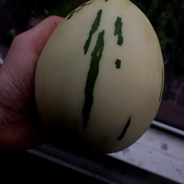 Tastes like a cucumber, looks like a dinosaur egg. Anyone know what it really is?
