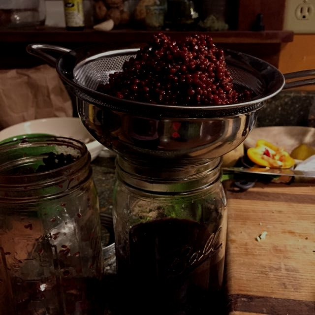 Draining Elderberries after soaking for six weeks in moonshine (shhh!) to make a tincture. Proven...