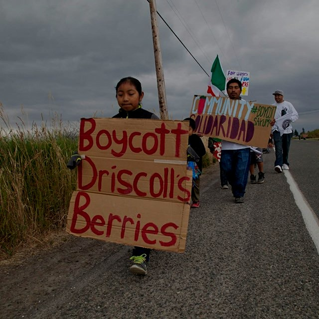 """Farmworkers at Washington's Sakuma Brothers farms have voted to join what could be the first uni..."