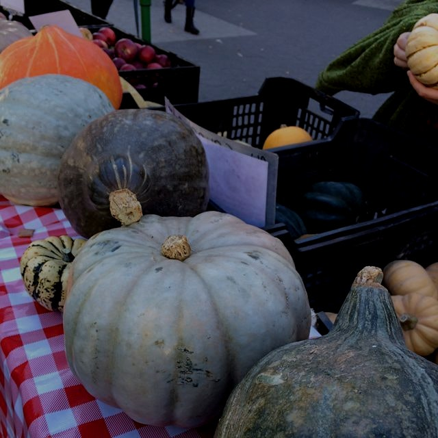 Beautiful seasonal squash! #healthwayfarms #greenmarketnyc