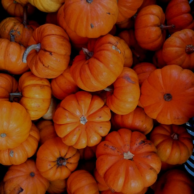'Tis the season of mini pumpkins.