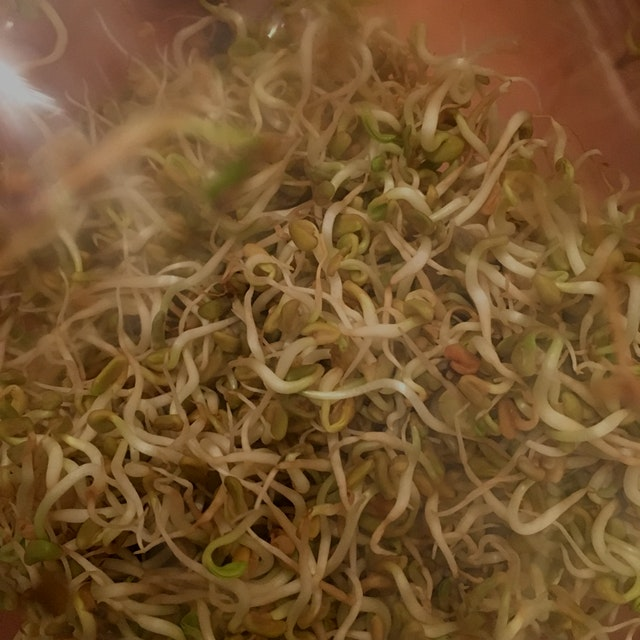 I sprouted fenugreek seeds then put them by the window to sprout microgreens but not sure how lon...