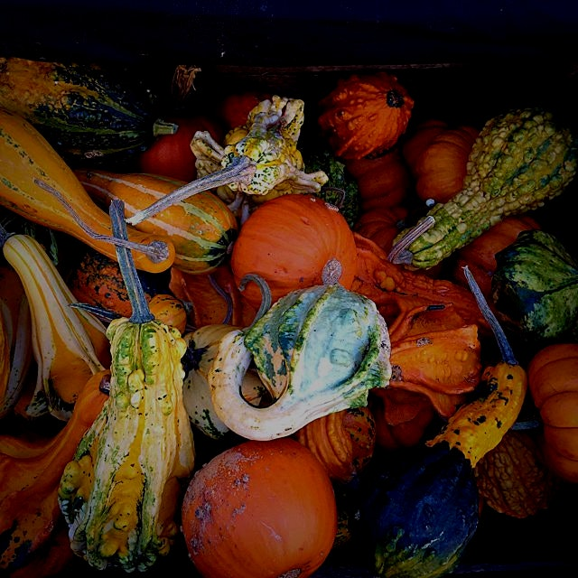 Winter gourds and squash at the Union Square Greenmarket, NYC!