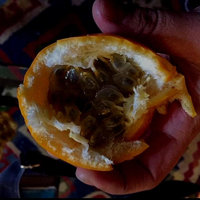 Granadilla.. Gooey and delicious tropical fruit here in Colombia!
