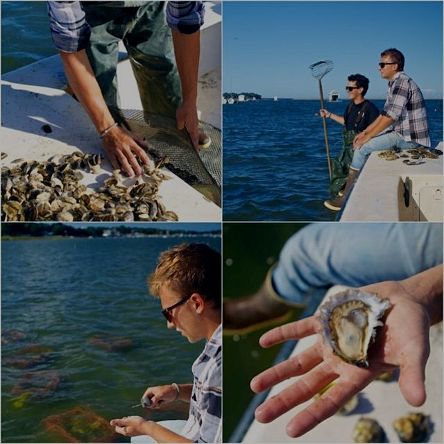 #tbt Visiting an oyster farm in Duxbury, MA last summer. Nothing quite like slurping an oyster st...