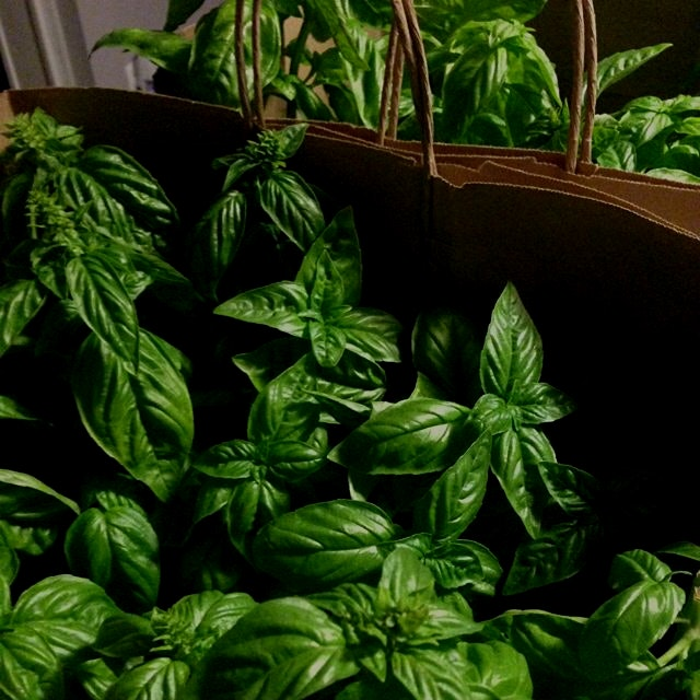 Fresh basil plants from Olive Creek Farms in South Jersey as my featured item for tonight's Tasti...