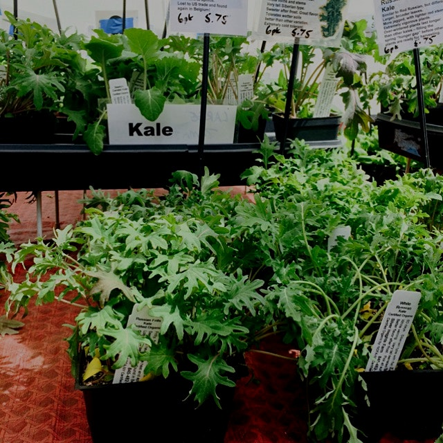 Grow your own kale. Now on sale at the union square greenmarket. Visit silver heights farm on Wed...