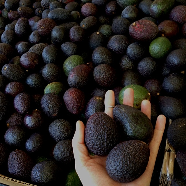 Pee Wee California Avocados!