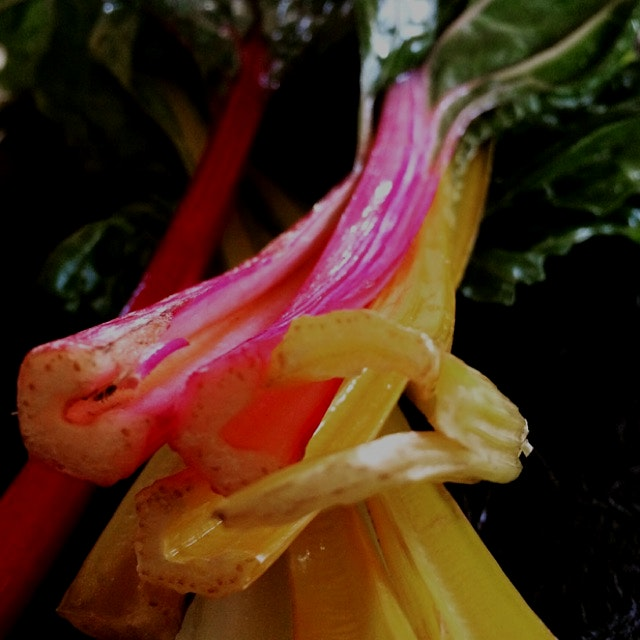 Rainbow chard and kale recipe on my blog! So easy and so tasty!!