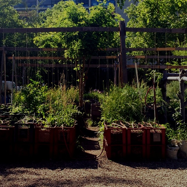 I found the urban garden in what is basically the Williamsburg of Berlin... Wonderful and relaxin...