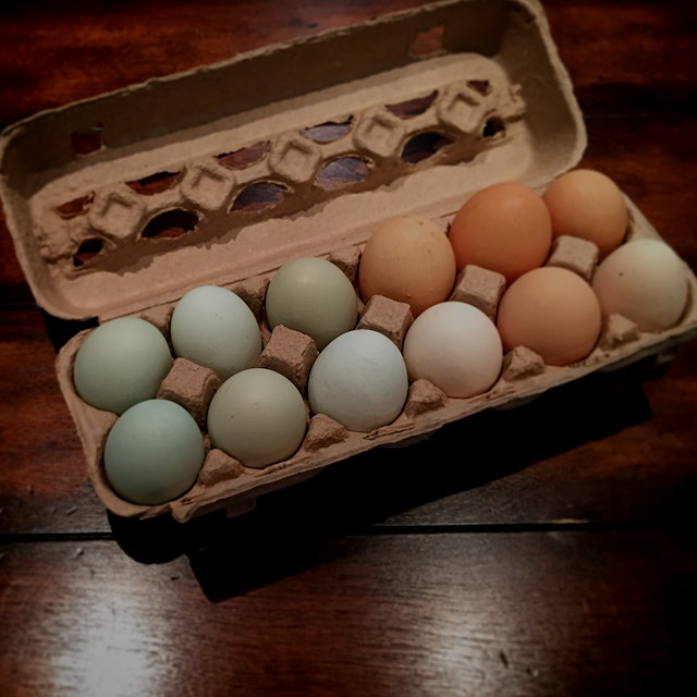 The difference between fresh local eggs and the ones from the grocery store is enormous! The yolk...